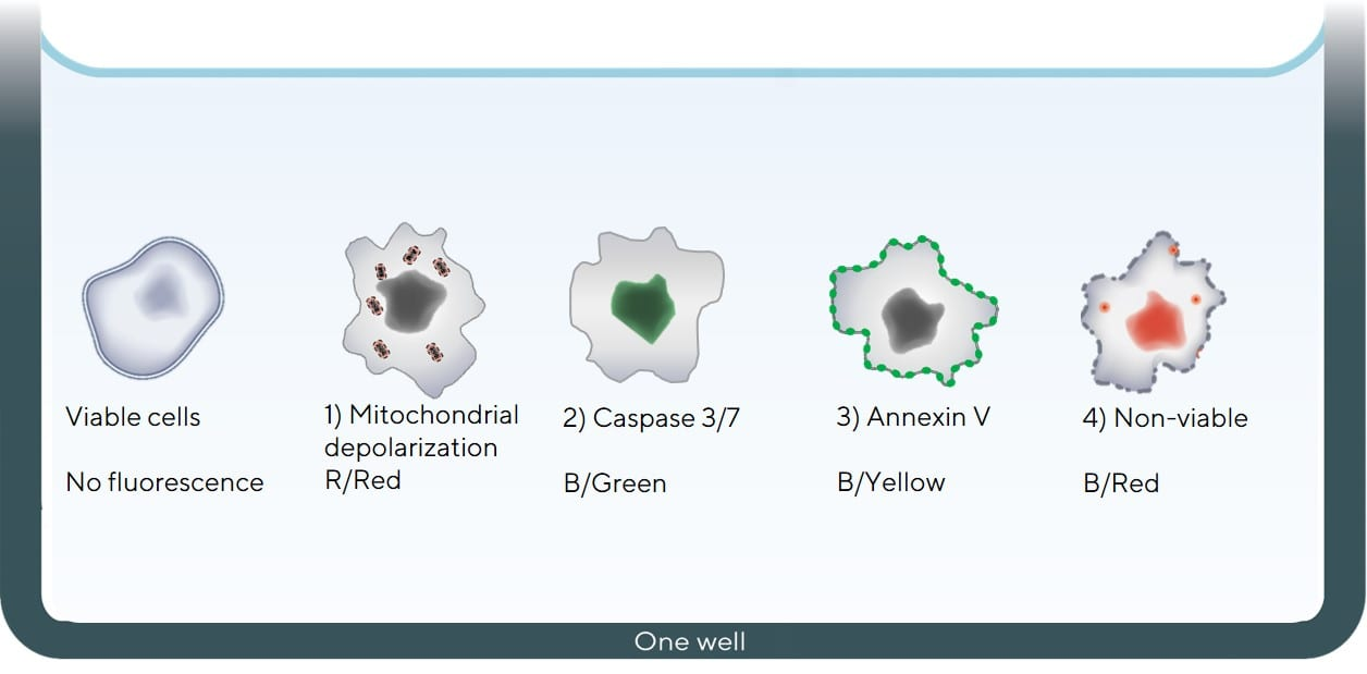 Cell-Health-Viability-Figure-1