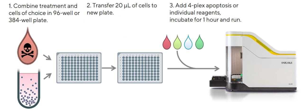 Cell-Health-Viability-Figure-4